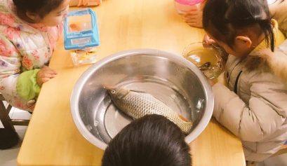 四川の河魚