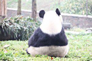 【都江堰】中国大熊猫保護研究中心都江堰基地
