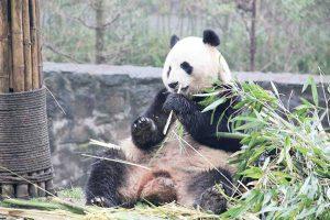 パンダのごはん笹はこの裏山でとれます。